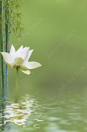 Poster Waterlelies décor aquatique bien-être, lotus et bambou