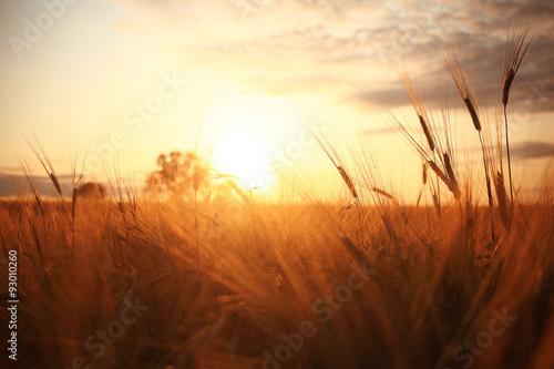 Fotobehang Cultuur Sunset in Europe in a wheat field
