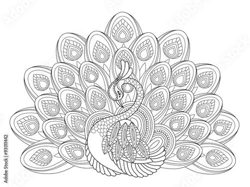 Obraz paw elegant-peacock