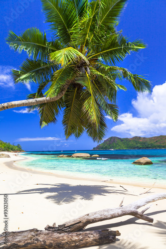Foto op Canvas Eiland pure tropics. white sand, palm-tree, azure sea
