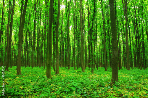 obraz dibond forest green