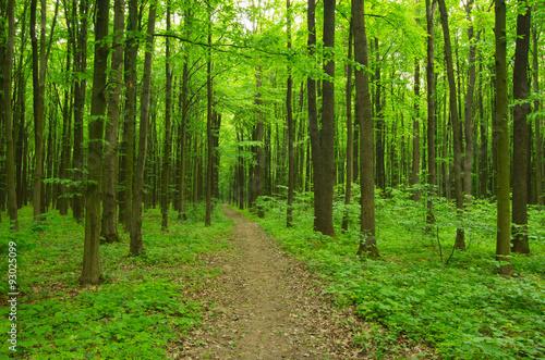 Foto op Canvas Weg in bos Path in green forest