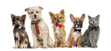 Group Of Dogs And Cats In Fron...