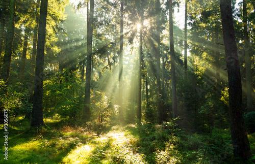 Fototapeta Nadelwald im Herbst obraz na płótnie