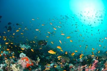 Fototapeta na wymiar モルディブの海