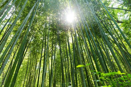Foto op Plexiglas Bamboe High Bamboo forest