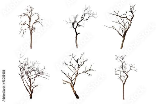 Fotografía  árbol muerto aislado en el fondo blanco