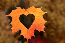 Heart In Autumn Leaf On Autumn Nature  Background.
