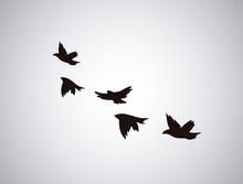 Vector Silhouette Flying Birds...