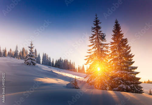 Poster Rose clair / pale Landscape of mountains winter. View of snow-covered conifer trees at sunrise.