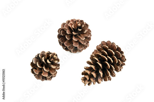 Fotografía  various pine cone trees isolated on white