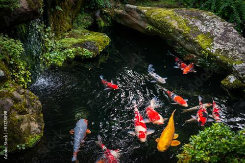 Koi Karpfen in Japan Canvas-taulu