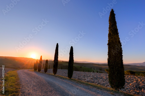 Fotobehang Toscane Cypress trees road in Tuscany, Italy at sunrise. Val d'Orcia