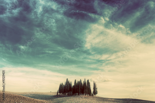 Foto op Canvas Olijf Cypress trees on the field in Tuscany, Italy at sunset. Vintage