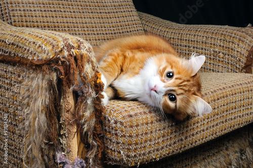 Fotografie, Obraz Pet a nábytek