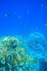 Fototapeta na wymiar Tranquil underwater scene with copy space