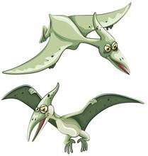 Pterosaur Flying In The Sky