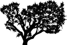 Black Tree With Thick Branches