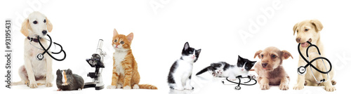 puppy and kitten - 93195431