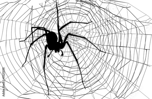 spider and spider web Canvas Print