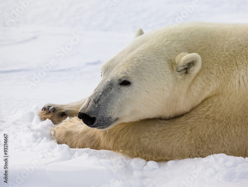 In de dag Ijsbeer Portrait of a polar bear. Close-up. Canada. An excellent illustration