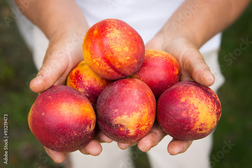 Nectarines in hands