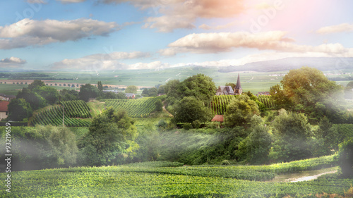 Photo sur Aluminium Vignoble Sunrise on vineyard , Montagne de Reims, France