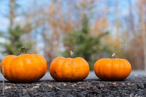 Aluminium Prints Autumn Autumn halloween pumpkin on the road