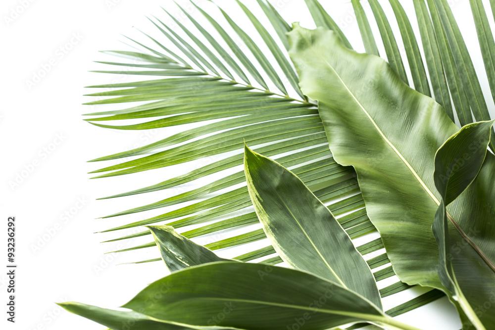 Fototapety, obrazy: アジアな植物