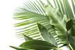 canvas print picture - アジアな植物