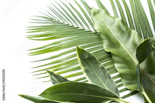 Fotografie, Obraz  アジアな植物