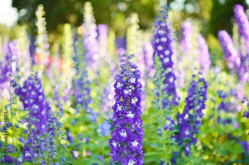 Garden with freshly Delphinium flower Fototapete