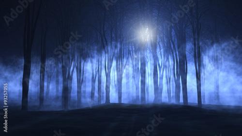 Fotografie, Obraz  3D foggy spooky forest