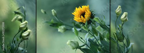 Fotografie, Obraz  Eustoma i słonecznik