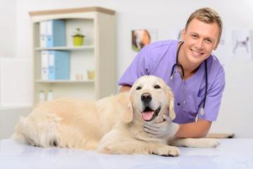 FototapetaProfessional vet examining a dog