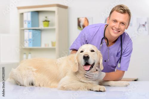 Professional vet examining a dog  - 93280091
