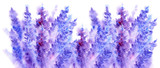 Watercolor lavender flower blossom background  - 93281810