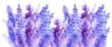 Watercolor lavender flower blossom background