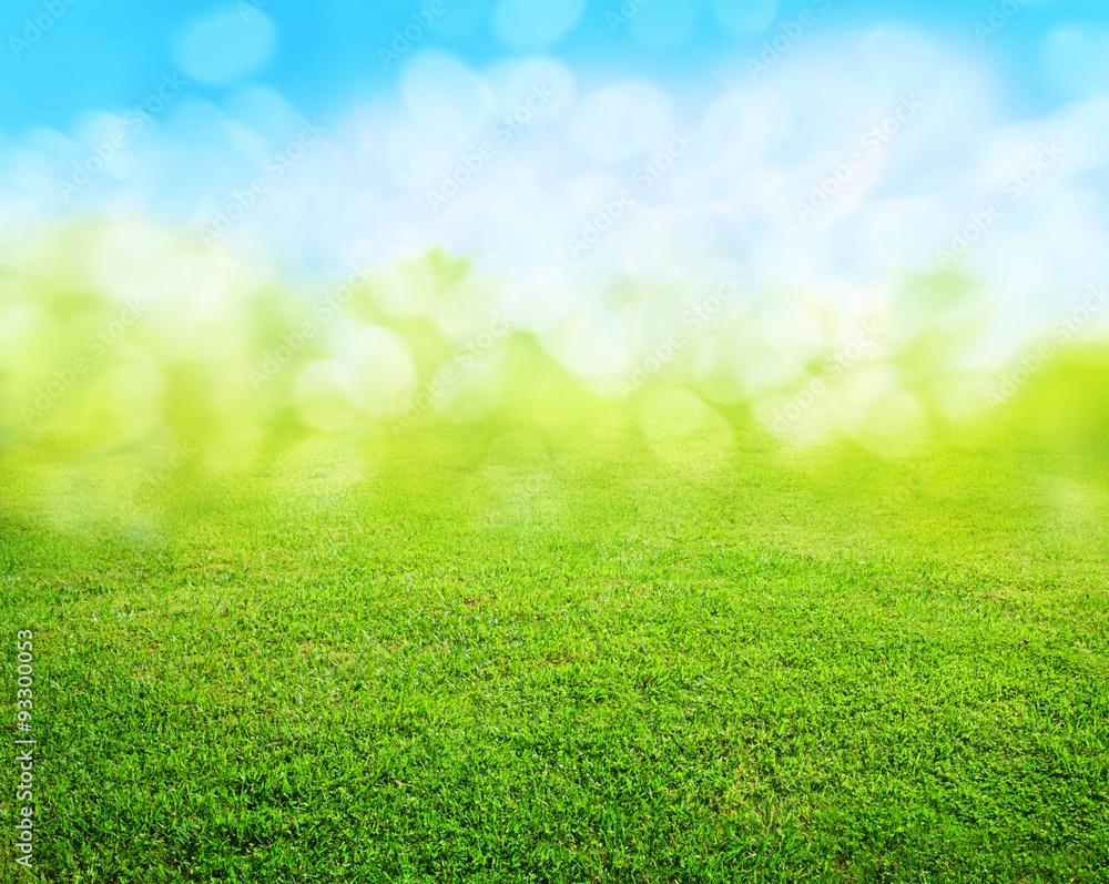 Fototapety, obrazy: grass background
