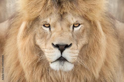 Staande foto Leeuw Crowned lion king