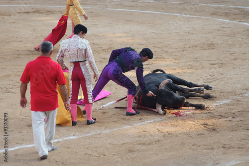 Toreadors standing next to dead bull in corrida performance in Spain