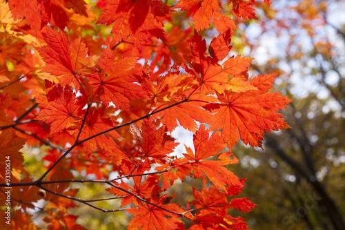 Poster de jardin Rouge Autumn wood