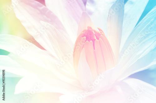 Ingelijste posters Lotusbloem lotus