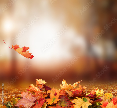 Foto op Canvas Herfst Falling Autumn Leaves background