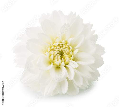 Poster de jardin Dahlia dahlias flower isolated on the white background
