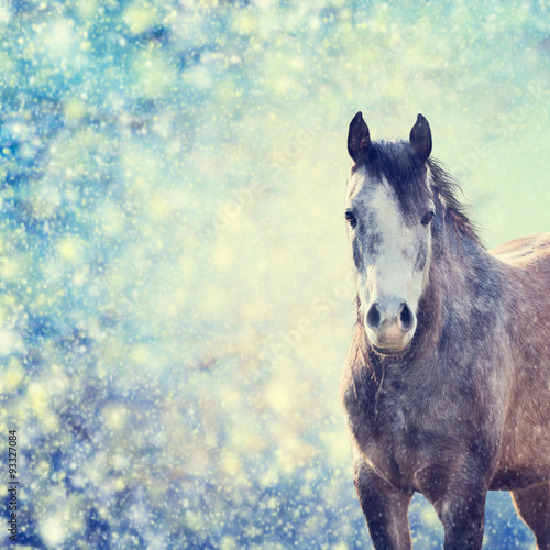 Fototapety, obrazy: Beautiful  gray horse portrait on winter background of snow-fall
