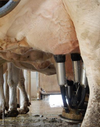 Fotografie, Obraz  milking machine on cow farm