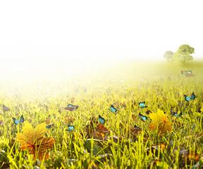 FototapetaGreen field in bright light