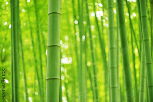 In de dag Bamboe Bamboo Forest