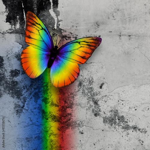 Fotografie, Obraz  rainbow butterfly